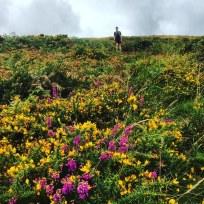 Wild Flowers on the moor